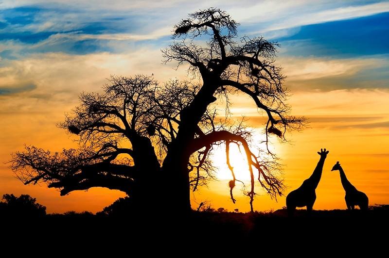 . Safari Trips